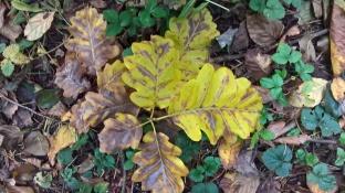 automne encoree2